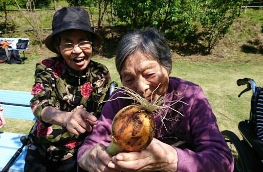 ☆豊作!こども園と学生と合同玉ねぎ収穫★