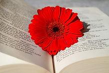 Psy humaniste tours fleur rouge dans livre ouvert