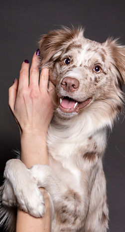 ShSt dog hugs hand.jpg