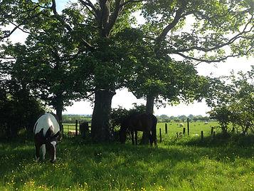 Horses in clover_edited.jpg