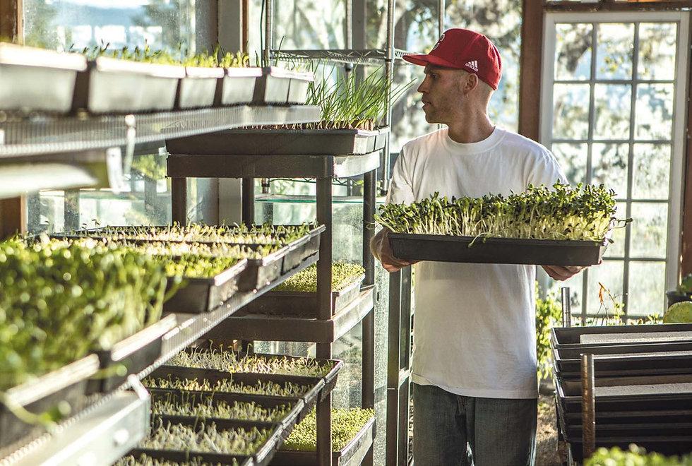 cody-lake-harvesting-microgreens.jpg