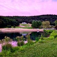 Newly Landscaped Pond