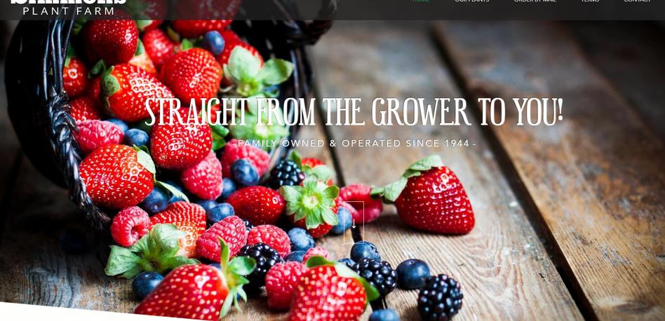 Plant Farm Website Design