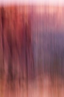 Canyon Rim Sunset