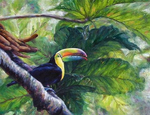 Toucan of the Ticos