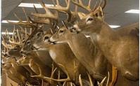 Virginia Deer Classic - Trophy Deer Contest