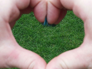 Show your lawn some love!