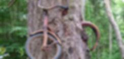 bike_inside_tree_by_sushi_robots.jpg