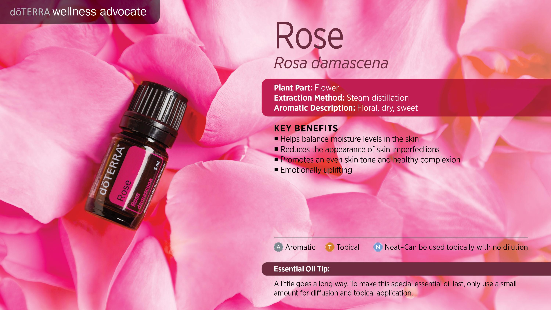 wa-rose
