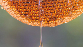 Origin Forest Honey : Saving Forests One Hive at a Time