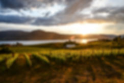 Sunset over the vineyards in Penticton,