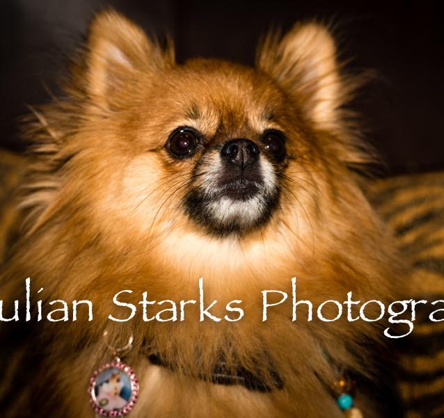 Animals_Julian Starks Photography_0012.j