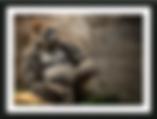 Screen Shot 2020-01-21 at 3.45.56 PM.png