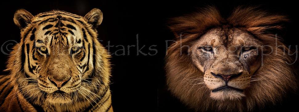 _JSP7801_San Francisco Zoo_Julian Starks