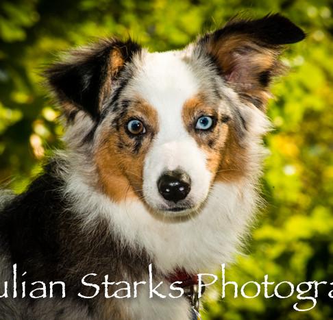 _JSP4347_Animals_julianstarksphotography
