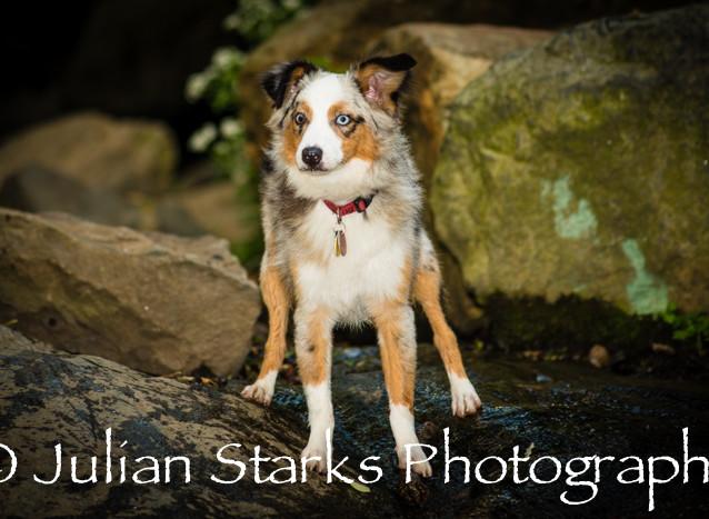 _JSP4451_Animals_julianstarksphotography