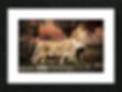 Screen Shot 2020-01-21 at 3.52.50 PM.png