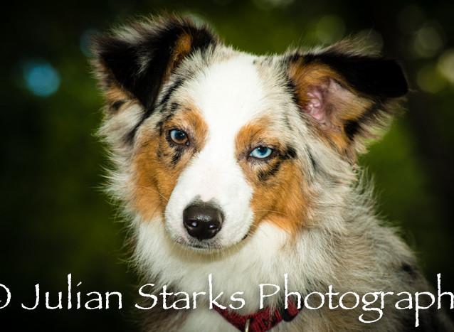 _JSP4368_Animals_julianstarksphotography