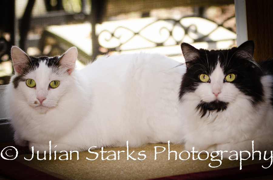 Animals_Julian Starks Photography_0003.j