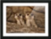Screen Shot 2020-01-21 at 3.35.32 PM.png