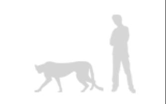 Cheetah_Man comparison image.png