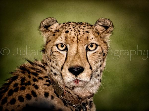 3940_San Diego Wildlife Safari #2_2017_-