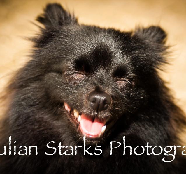 Animals_Julian Starks Photography_0005.j