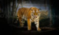_JSP2631_Denver Zoo_2017_Julian Starks P