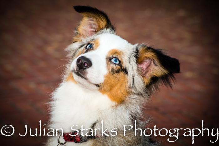 _JSP4307_Animals_julianstarksphotography