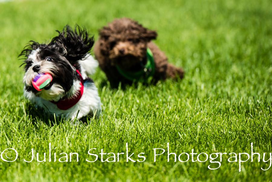 Animals_Julian Starks Photography_0006.j