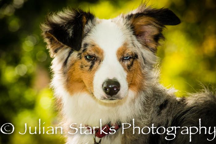 _JSP4377_Animals_julianstarksphotography