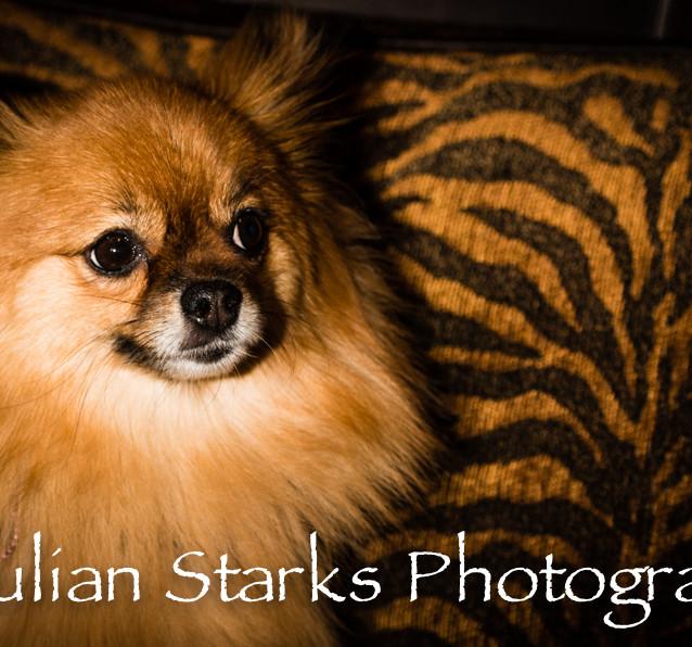 Animals_Julian Starks Photography_0015.j