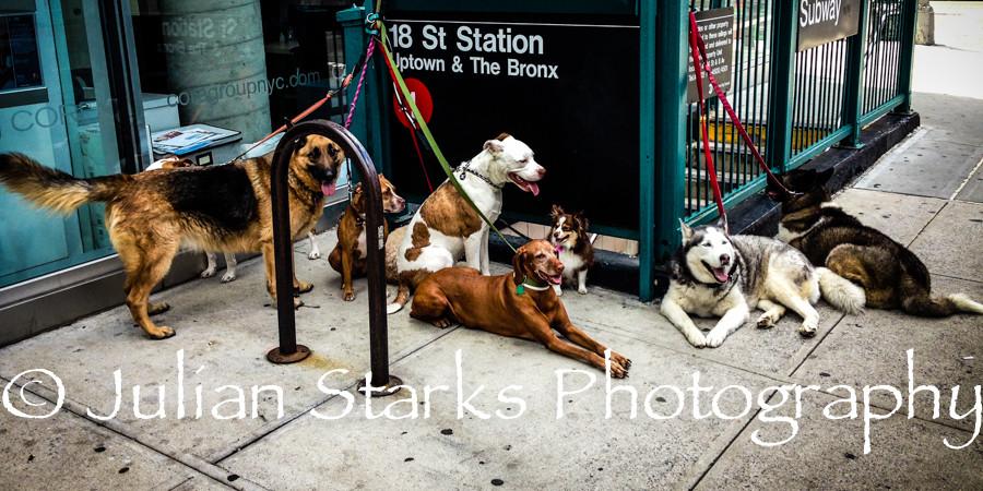 Animals_Julian Starks Photography_0008-E