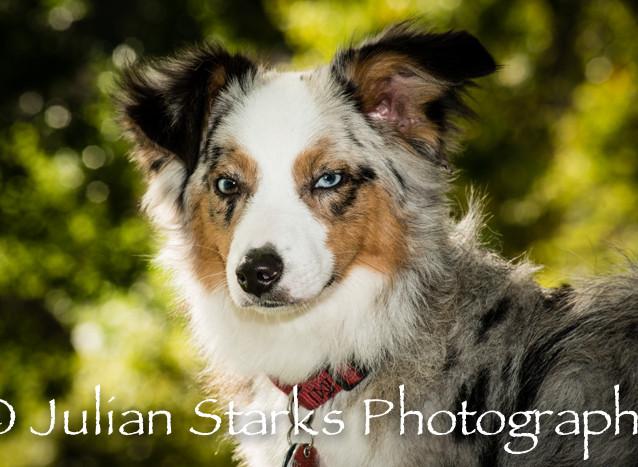 _JSP4379_Animals_julianstarksphotography