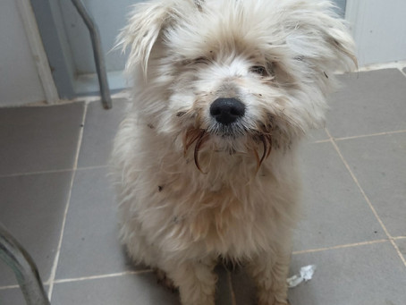[Животные в Южной Корее (3)] Почему в Южной Корее так много брошенных и умирающих собак?
