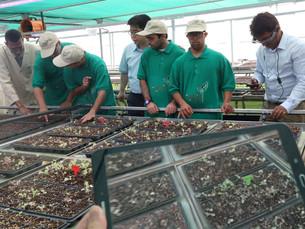 Проект Smart Farm в ОАЭ: испытательный стенд для аграрной трансформации
