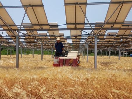 Hanwha изучает возможность строительства солнечных панелей над посевами