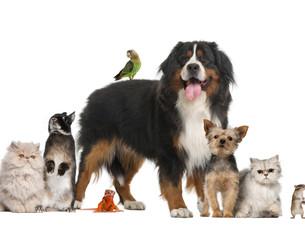 Южная Корея ужесточает правила для предприятий, связанных с домашними животными