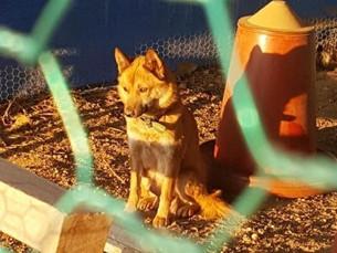 В Южной Корее участились случай нападения диких собак на домашний скот