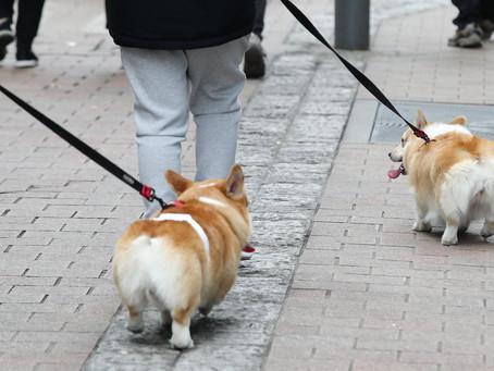 В Сеуле тестируют домашних кошек и собак на COVID-19