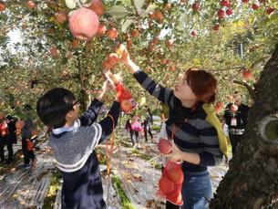 [В фокусе] Сельское население Южной Кореи сократилось на 42% с 2000 года