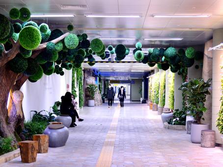 [Eye Plus] Зеленое убежище под землей