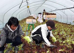 Пандемия препятствует прибытию рабочих-мигрантов в Южную Корею - депутат