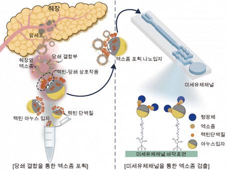 Южнокорейские ученые разработали метод ранней диагностики рака поджелудочной железы