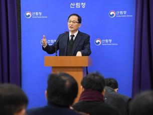 Лесная служба Республики Корея планирует использовать брошенные деревья для электрогенерации