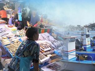 Южной Корее в этом году разрешили выловить около 41 тысячи тонн рыбы в ИЭЗ России
