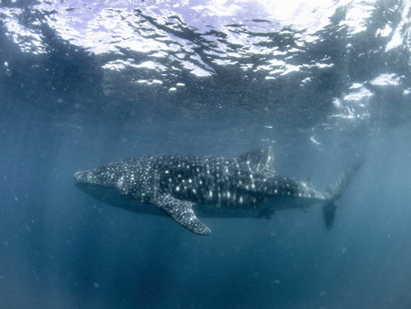 משרד התיירות של הפיליפינים מציין את חודש שימור הסביבה העולמי בחידוד ההנחיות להגנה על העולם התת ימי