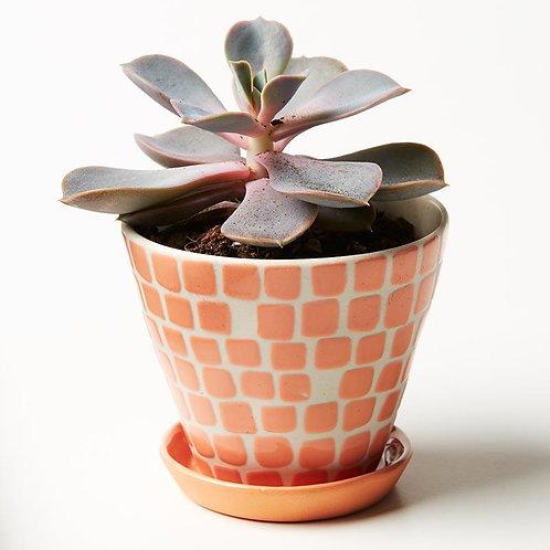 Pocket Planter