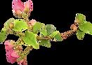 Contact Form, The Bougainvilleas Contact Form, Exclusive Wedding Venue, Dreams, Flower, love, Energy Corridor