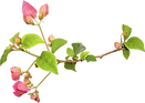 Contact Form, The Bougainvilleas Contact Form, Exclusive Wedding Venue, Dreams, Flower